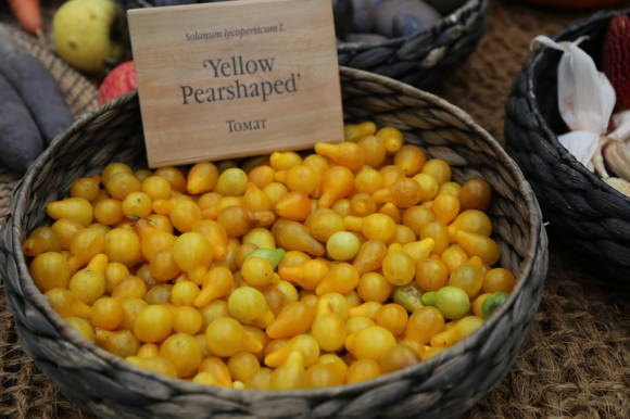 Томат Yellow Pearshaped