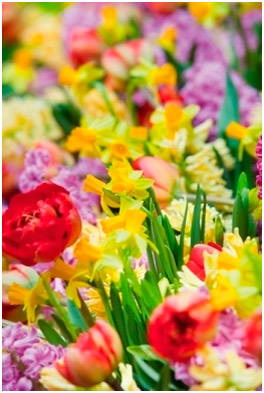 Тюльпаны, нарциссы, гиацинты