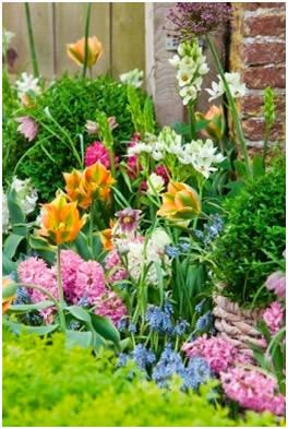 Гиацинты, тюльпаны, мускари, орнитогалум
