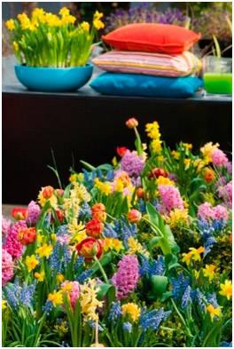 Нарциссы, тюльпаны, гиацинты, мускари