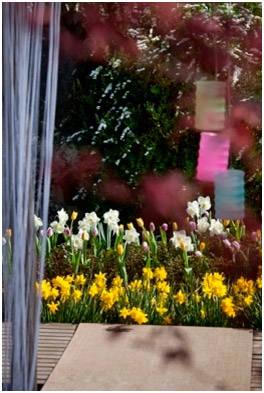 Нарциссы, тюльпаны