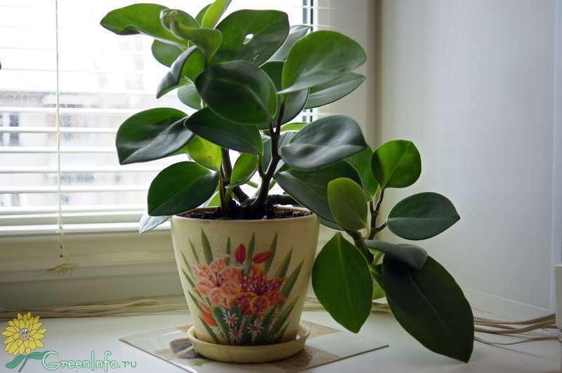 Купить домашние цветы на форумах цветы в калининграде мелким оптом купить