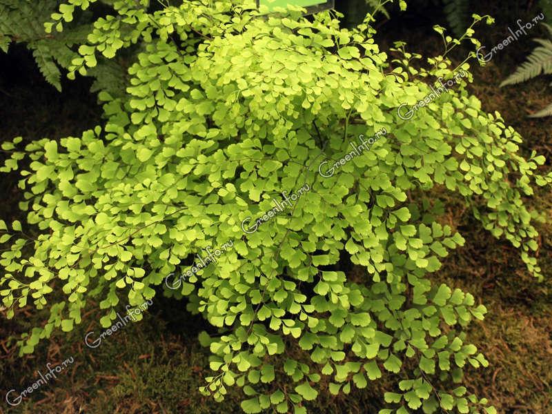 Срезанные цветы горшечные растения  оптовая и розничная