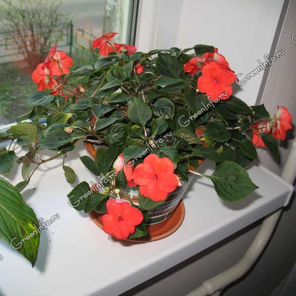 Цветы в кино фото
