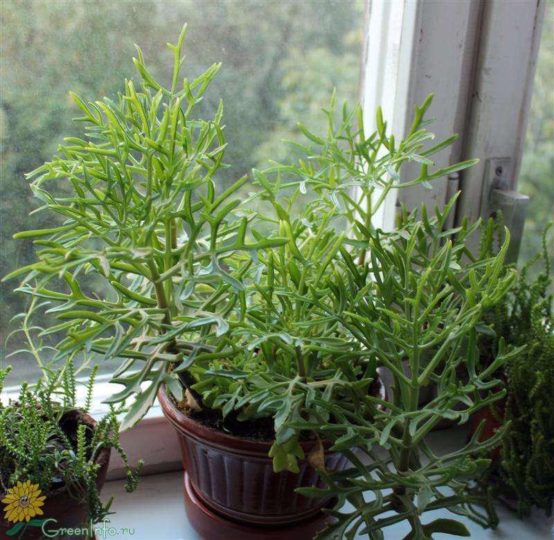 Самые красивые комнатные растения  необычные редкие