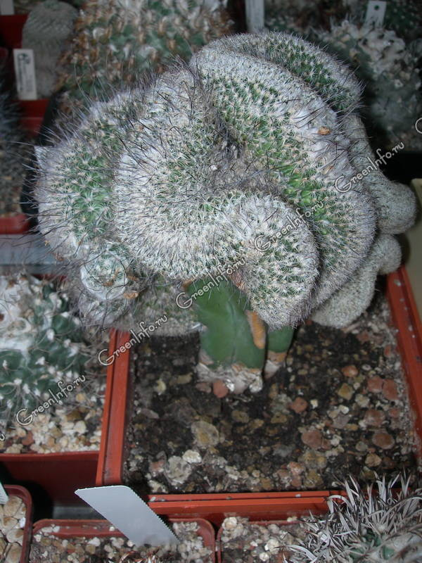 Виды кактусов и названия естественные места обитания и