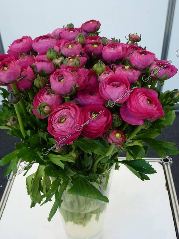 Луковичные цветы купить весенние многолетники заказать