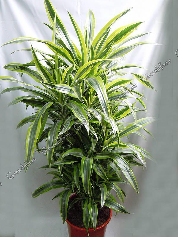 адовые растения хорошо растущие в тени 500 x 500 · jpeg
