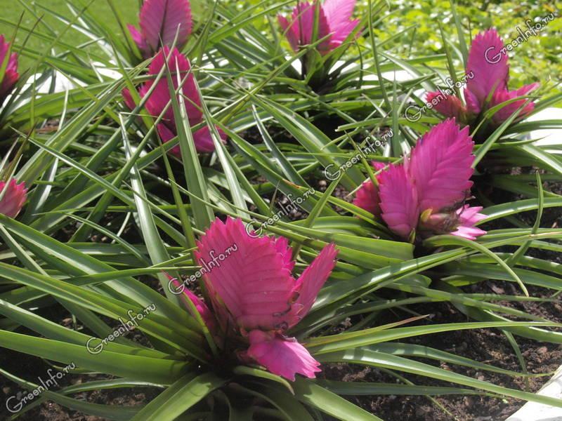 Комнатный цветок  спатифиллум Уход приметы и все такое