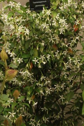 фото растений - фотокаталог - Алфавитный список растений с фото - GreenInfo.ru
